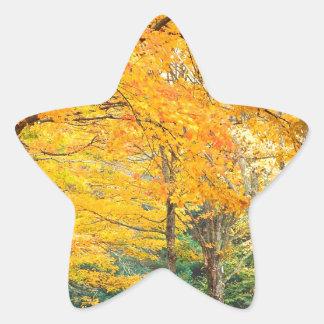 Autumn Rural Roadway Bass Lake Carolina Star Sticker