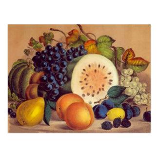 Autumn's Bounty - Postcard