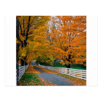 Autumn Scenic Backroad New Hampshire Postcard