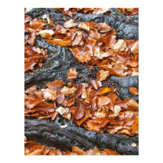Autumn Season Leaves Between Tree Roots Letterhead