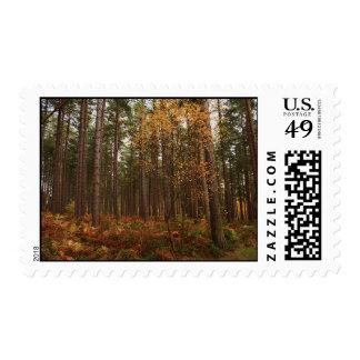 Autumn Sherwood Postage