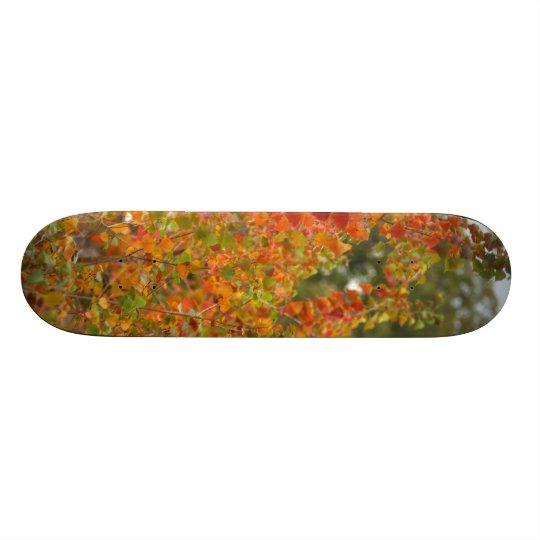 Autumn Skateboard