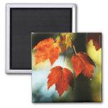 Autumn Splendor 2 Inch Square Magnet