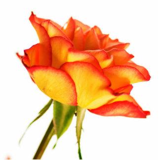 Autumn Splendor Fire Rose Flower Photo Sculpture