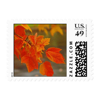 Autumn Splendor Leaves of Fall Postage Stamp