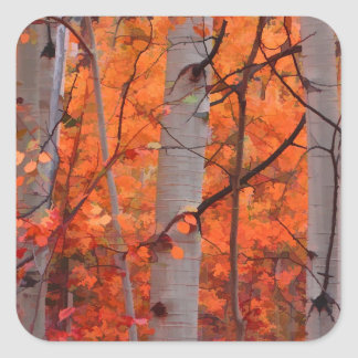 Autumn Splendor Square Sticker