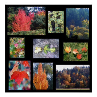 Autumn Splendors Print