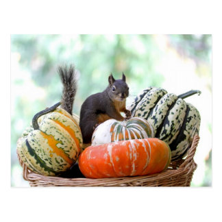 Autumn Squirrel Postcard