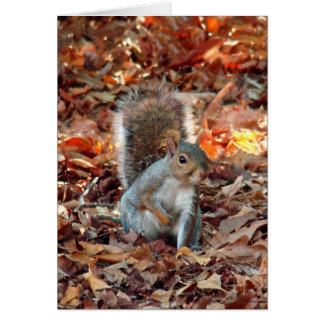 Autumn Squirrel Stationery Note Card