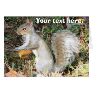 Autumn Squirrel Template Greeting Cards
