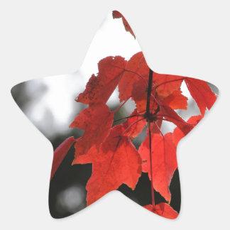 Autumn Star Stickers