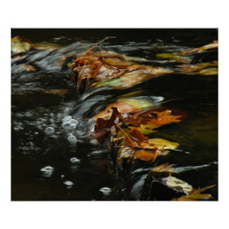 Autumn Stream Cascade Photo Poster