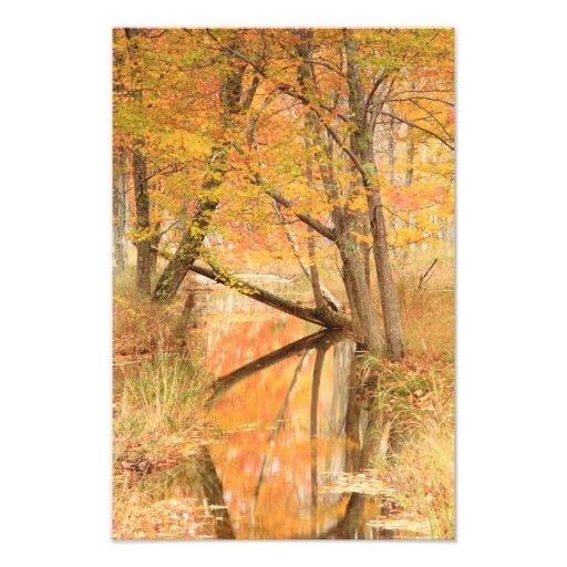 Autumn Stream Photo Print