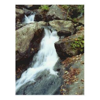 Autumn Stream Postcard