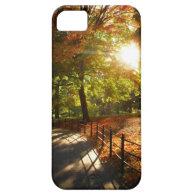 Autumn Sun in Central Park - New York City iPhone 5 Case