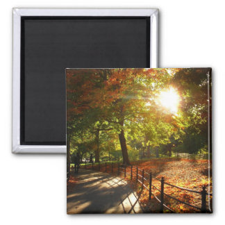 Autumn Sun in Central Park New York City Refrigerator Magnets