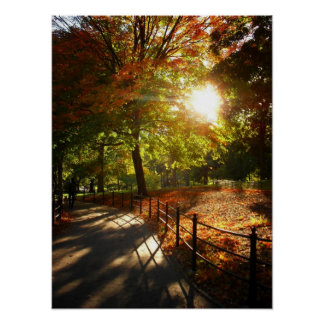 Autumn Sun in Central Park, NYC, Medium Poster