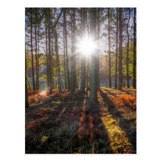 Autumn Sun Postcard
