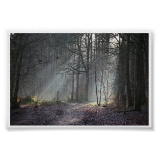 Autumn sun rays streak through woodland poster