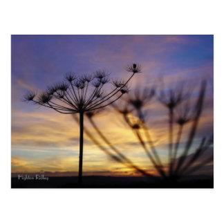 Autumn Sunset Echoes postcard
