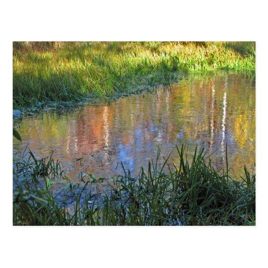 Autumn Swamp Reflections Postcard