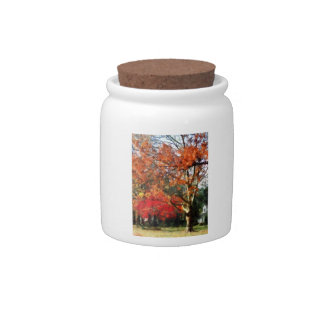 Autumn Sycamore Tree Candy Dishes