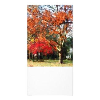 Autumn Sycamore Tree Photo Greeting Card