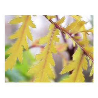 Autumn Tansy Leaves Postcard