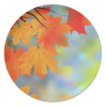 Autumn Theme Beautiful Plate