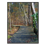 Autumn Trail Post Cards