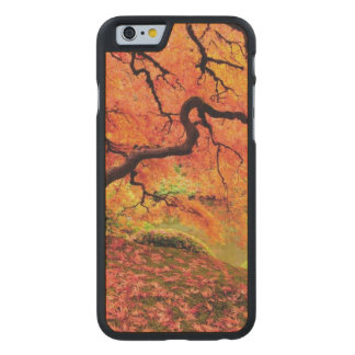 Autumn Tree 2 Carved Maple iPhone 6 Case