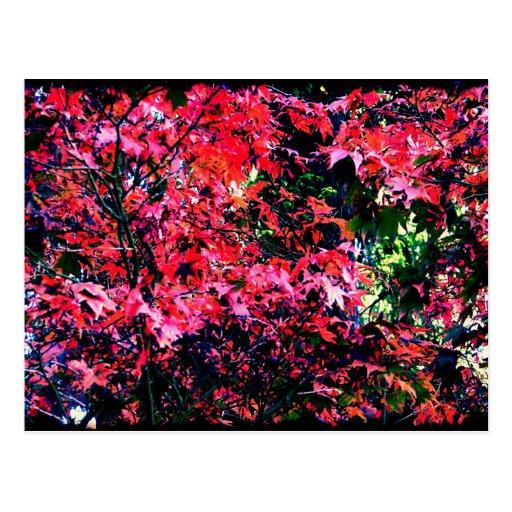 Autumn Tree Art Postcard