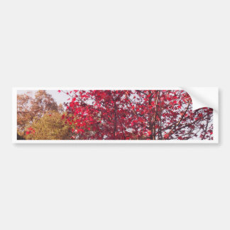 Autumn Tree Bumper Sticker