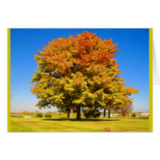 Autumn Tree Colors Card