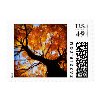 Autumn Tree Fall Leaf Leaves Love Postage Stamps