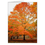 Autumn Tree in Central Park, New York City Greeting Card