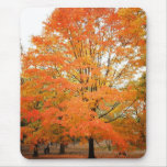 Autumn Tree in Central Park, New York City Mousepads