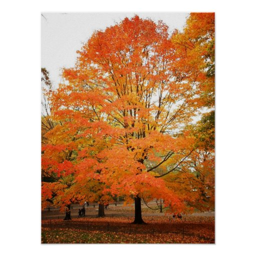 Autumn Tree in Central Park, NYC, Medium Print