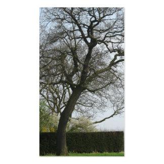 Autumn Tree Photo Card Business Card Template