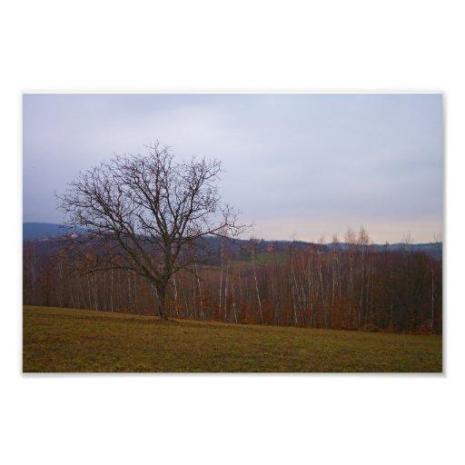 Autumn Tree Photographic Print