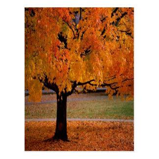 Autumn Tree Postcard