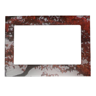Autumn Tree Red Leaves Photo Magnetic Frame