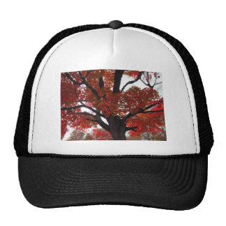 Autumn Tree with Bold Orange and Red Leaves Trucker Hat