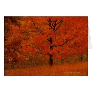 Autumn tree with red foliage card