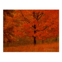 Autumn tree with red foliage postcard