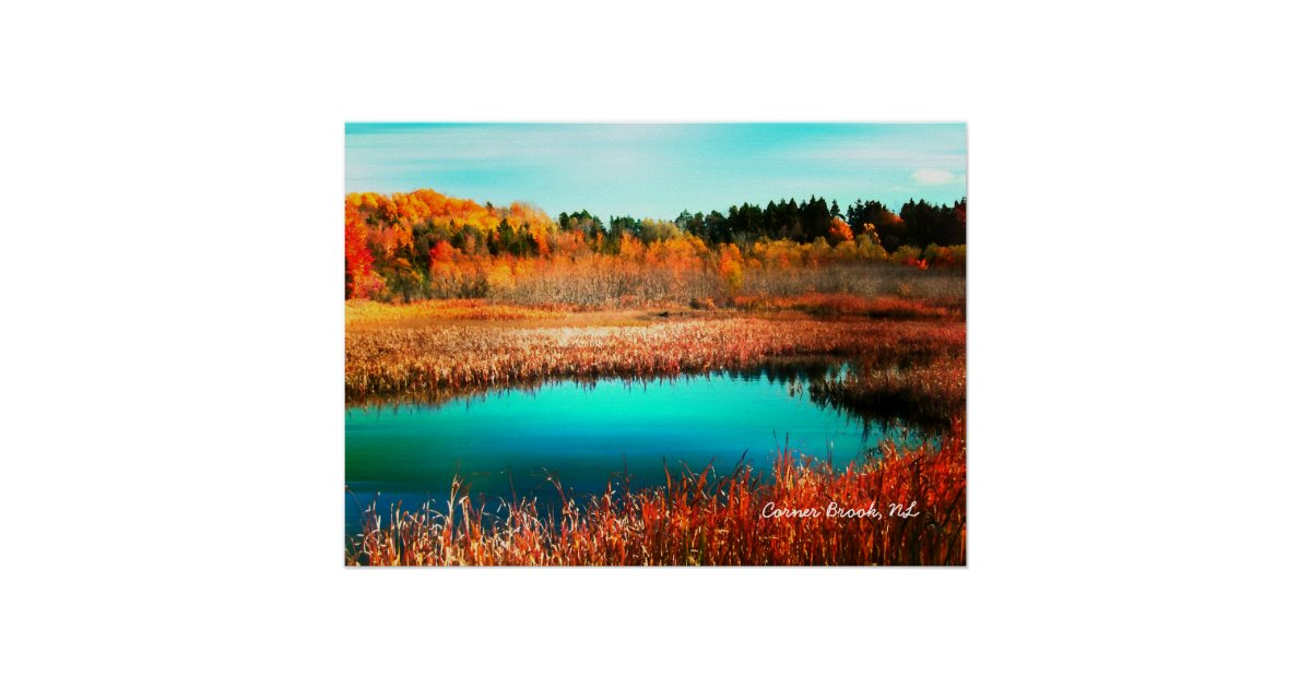 wallpaper canada trees newfoundland - photo #25