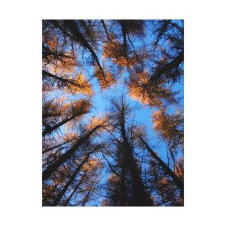 Autumn trees at sunset canvas print