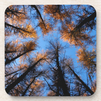 Autumn trees at  sunset coaster