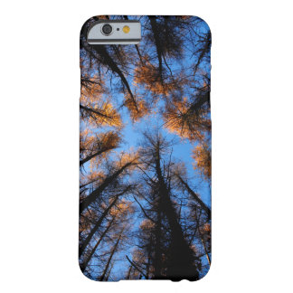 Autumn trees at sunset iPhone 6 case