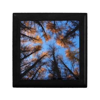 Autumn trees at  sunset jewelry box